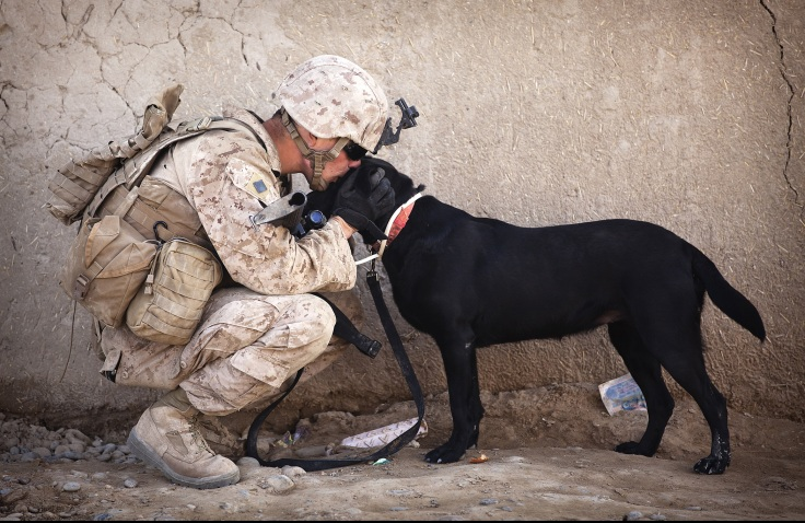soldier-dog-companion-service (1)
